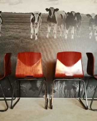 galvanitas stoelen